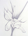Orchid Series VI.I